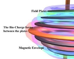 The Bio-Charge forms between the plates
