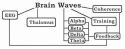 Stress and Anxiety Brain Wave Testing Before and After