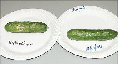 Day 12 Cucumber