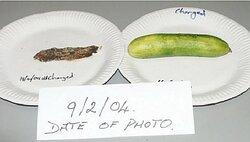 Day 26 A Cucumber