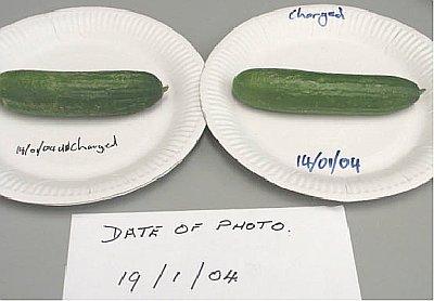Day 5 Cucumber