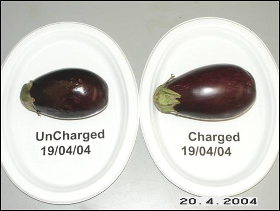 Eggplants side by side