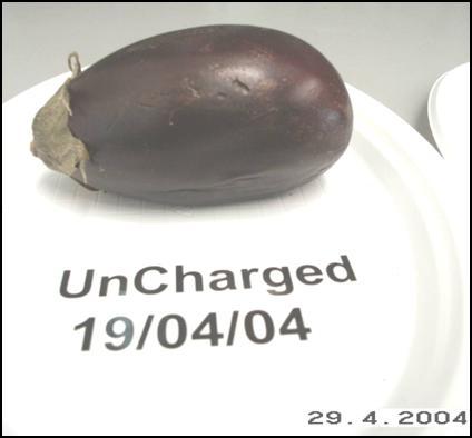 Eggplant uncharged 4-22-04