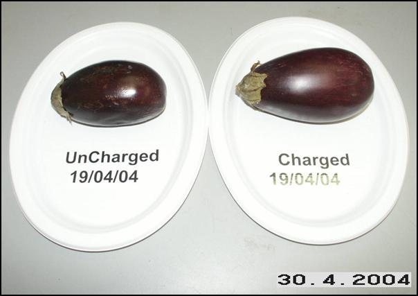 Eggplants April 30, 2004