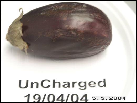 Eggplant uncharged May 5, 2004