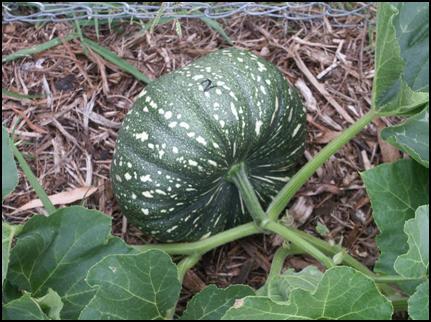 QEnergySpa Pumpkin Trial 12