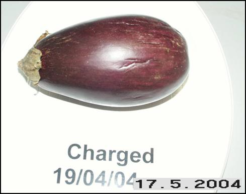 Eggplant charged May 17, 2004