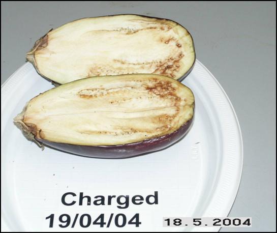 Eggplant open May 18, 2004